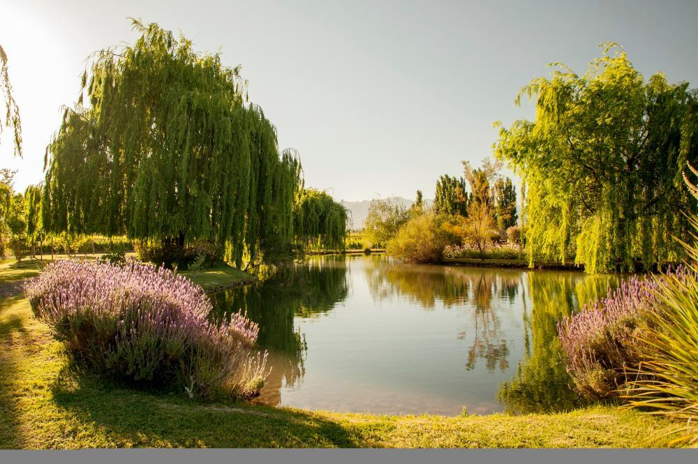 Renacer Visitor Center- Jardines y entorno sobre el cual se construirá el proyecto